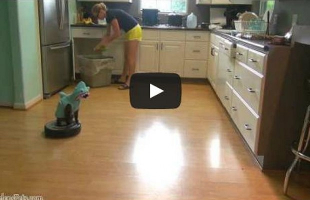 A Cat In A Shark Costume Riding A Roomba
