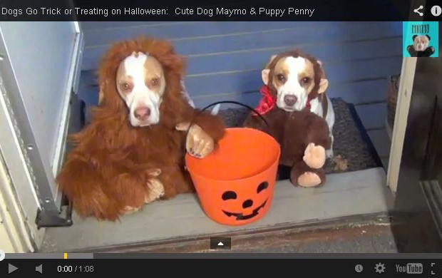 Doggie Trick or Treating