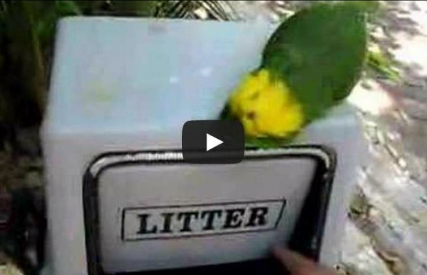 Laughing Parrots Sound Creepy