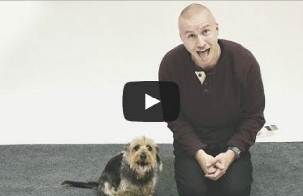 How Dogs React To A Human Barking